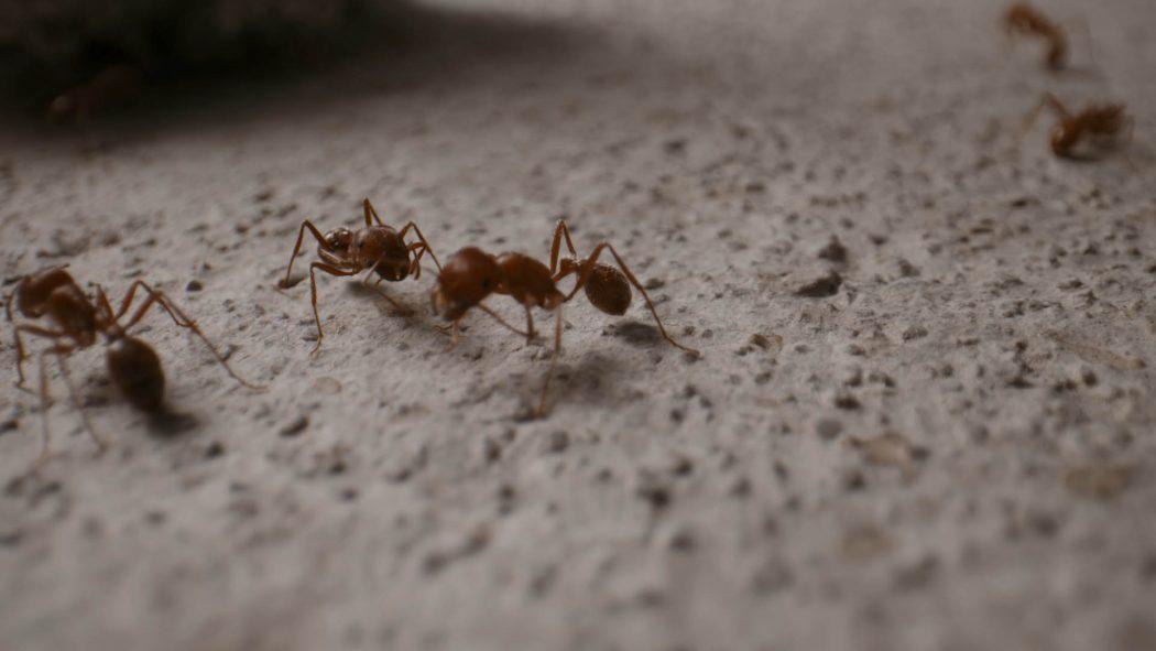 Algumas formigas andando na calçada