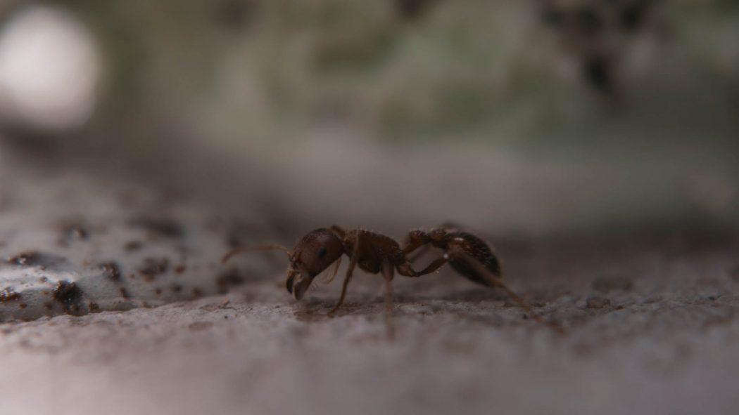 Uma formiga caminhando perto de um sorvete