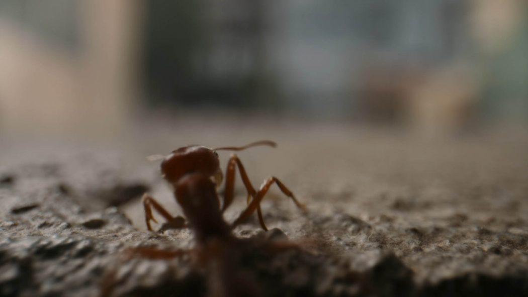 Uma formiga subindo na calçada