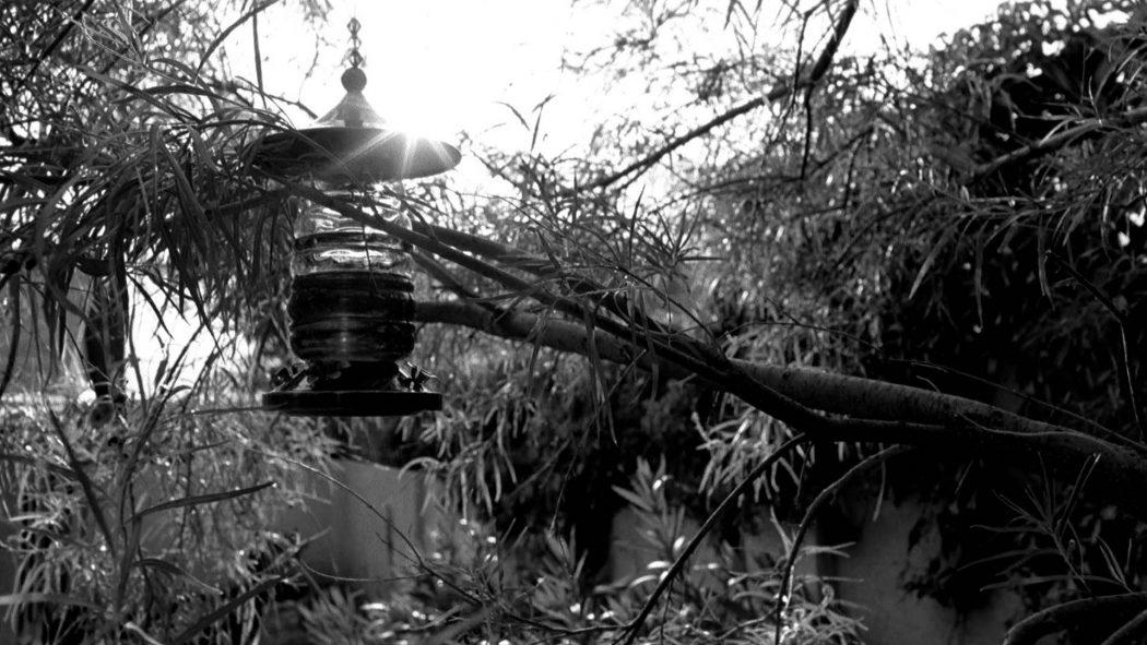 Um bebedouro de passarinho em meio a plantas de um jardim