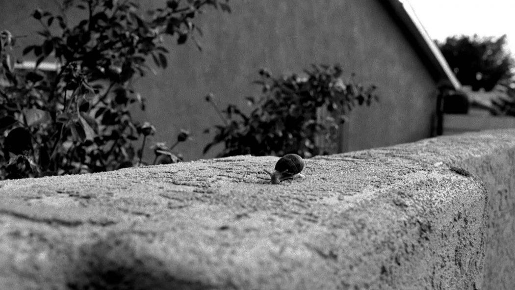 Uma lesma andando pelo muro do jardim