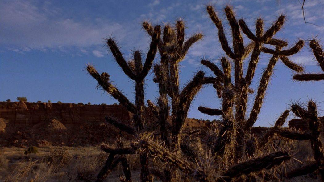 Cactos no deserto de Albuquerque